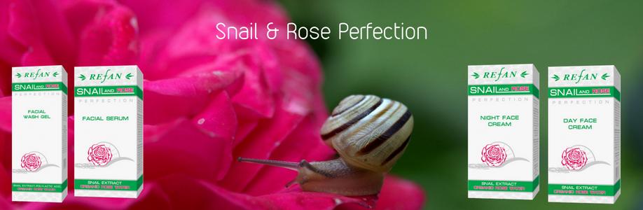 Snail & Rose